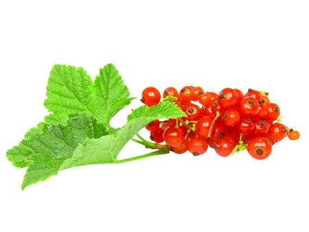 Red currant with leaf on white background. Isolated. photo