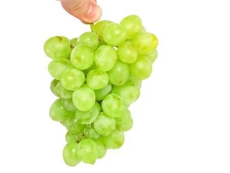 Branch of green grapes  in hand. Isolated over white photo