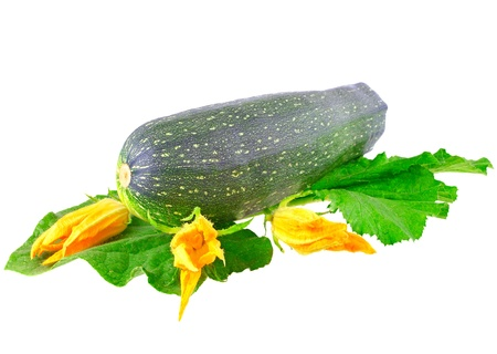 Black  vegetable  marrow with green foliage and yellow blossom on white background. Isolated over white photo