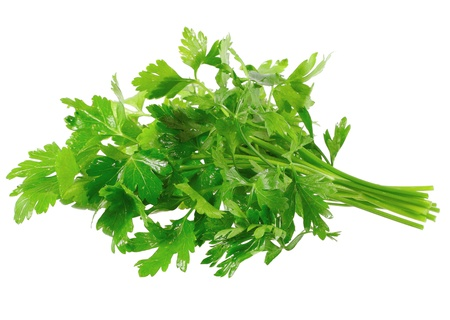 cilantro: Fresh parsley on white background. Isolated over white