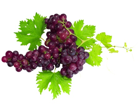 raisin: Branch of black grapes with green leaf. Isolated over white