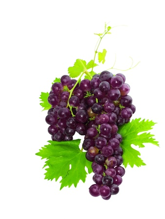 Branch of black grapes with green leaf. Isolated over white photo