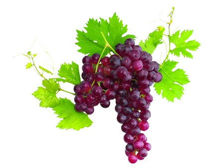 unpicked: Branch of black grapes with green leaf. Isolated over white