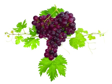 Branch of black grapes with green leaf. Isolated over white Stock Photo - 10228387