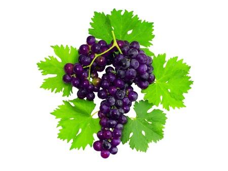 pasas: Rama de uvas negras con hoja verde. Aislado en blanco Foto de archivo