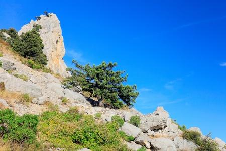 rocky mountain juniper: South part of Crimea peninsula, mountain   landscape. Ukraine.