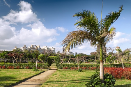 alexandria egypt: Park in Montaza Palace in Alexandria, Egypt.