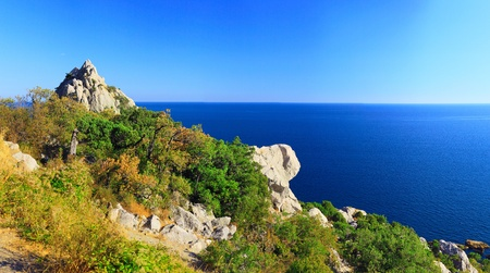 South part of Crimea peninsula, beach   landscape. Pine. photo