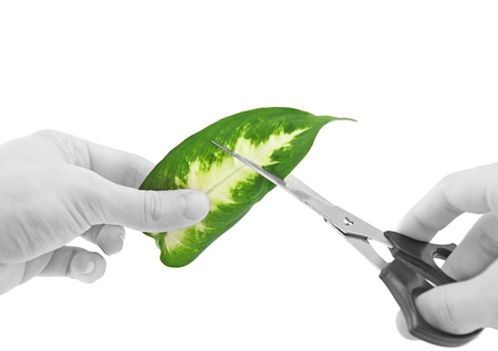 peacemaker: Ecology -green leaf in glass of water . Conceptual. Stock Photo
