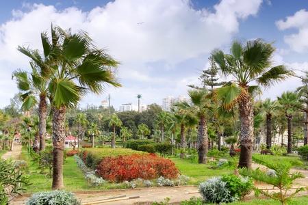alexandria egypt: Royal Park Montazah, Alexandria. Egypt. Mediterranean pine.