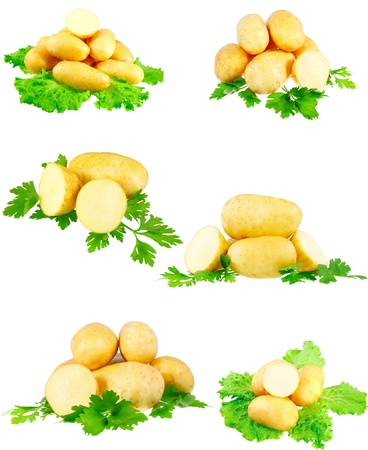 Collection(set) of young potatoes, decorating of parsley . Isolated over white photo