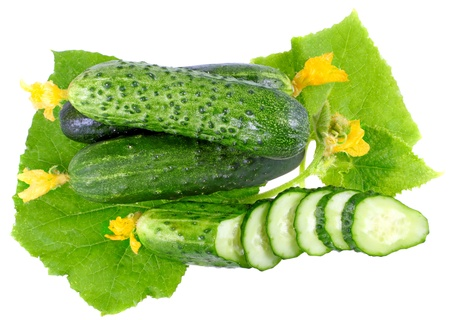 Cutting cucumbers on  with green leaf and yellow blossom cluster. Isolated over white. photo
