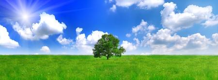 緑の牧草地に一人で大きな木。パノラマ