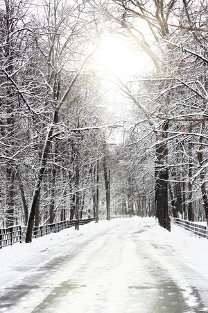 Silent snow-covered urban park in winter. Russia Stock Photo - 12801439