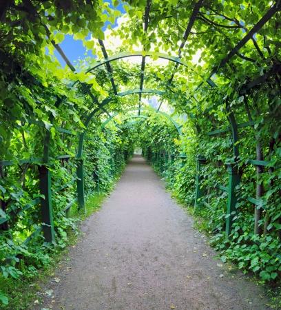정원에서 녹색 아치 밑의 통로. Peterghof.St.Peterburg