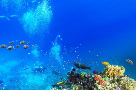 Scuba divers, coral and fish in the Red Sea Egypt photo