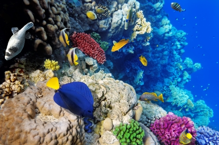polyps: Coral and fish in the Red Sea.Egypt Stock Photo