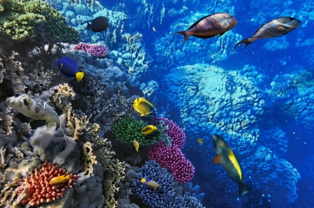 Coral and fish in the Red Sea.Egypt Stock Photo - 15642953