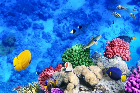 wild life: Coral and fish in the Red Sea.Egypt Stock Photo