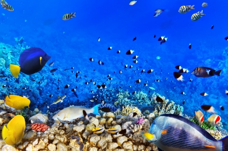 under the sea: Coral and fish in the Red Sea.Egypt Stock Photo