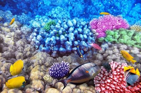 Coral y pescados en el Sea.Egypt Red Foto de archivo