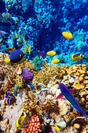 Coral and fish in the Red Sea  Egypt, Africa Stock Photo - 16031096