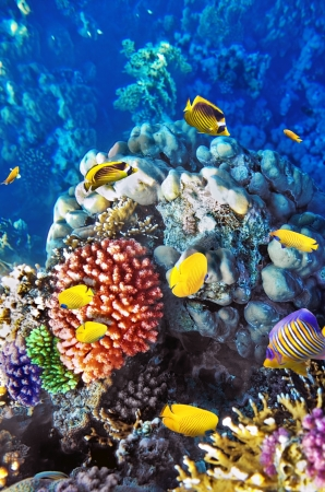 Coral and fish in the Red Sea Egypt Stock Photo - 16031087