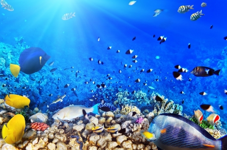 live coral: Coral and fish in the Red Sea.Egypt Stock Photo