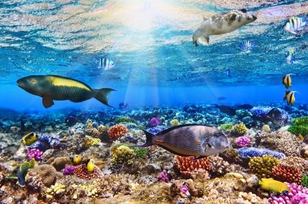 サンゴと魚赤 Sea.Egypt