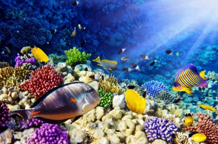 Coral and fish in the Red Sea.Egypt Stock Photo - 16400783