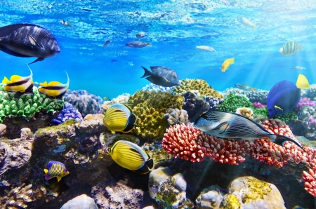Coral and fish in the Red Sea.Egypt 版權商用圖片