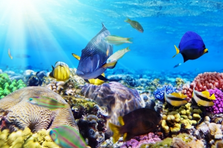 reefscape: Coral and fish in the Red Sea.Egypt Stock Photo