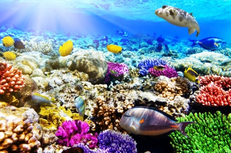 live coral: Coral and fish in the Red Sea. Egypt, Africa