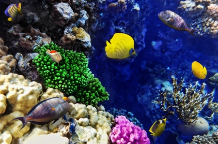 Coral and fish in the Red Sea. Egypt, Africa Stock Photo - 17413976