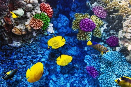 Coral and fish in the Red Sea. Egypt, Africa Stock Photo - 17413950