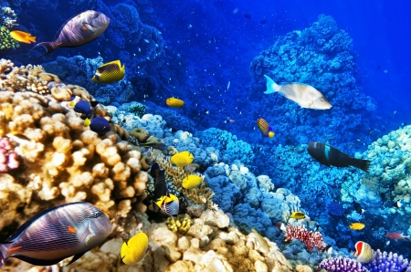 polyps: Coral and fish in the Red Sea. Egypt, Africa
