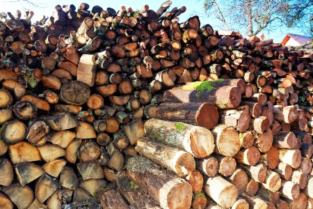 Firewood combined in a woodpile  photo