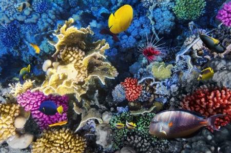 サンゴと魚紅海エジプト、アフリカ 写真素材