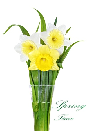 Beautiful spring three  flowers : yellow-white-orange narcissus (Daffodil). Isolated over white.  photo
