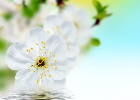 Beautiful spring flowers  background – blossoms   photo