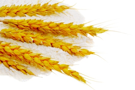 broken hill: Spikelets of wheat on flour spillage.Isolated