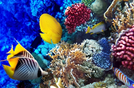 under: Coral and fish in the Red Sea. Egypt, Africa