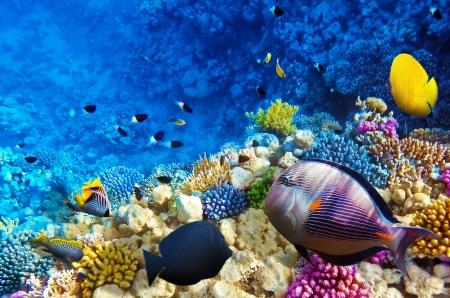Koraal en vissen in de Rode Zee. Egypte, Afrika Stockfoto