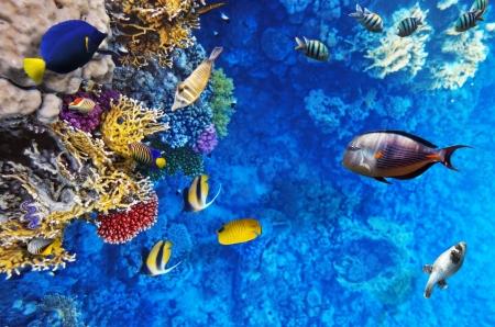 サンゴと海の赤魚。エジプト、アフリカ