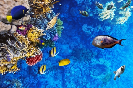 aquarium: Coral and fish in the Red Sea. Egypt, Africa