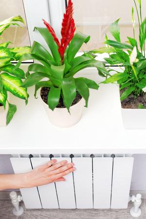 bimetallic: Arm put on  heating white radiator.Windowsill with flowers Stock Photo