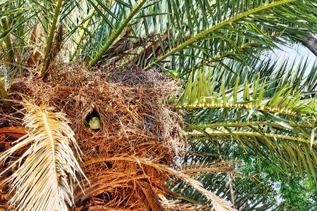 quaker: Big Argentina Parrot nests. Stock Photo