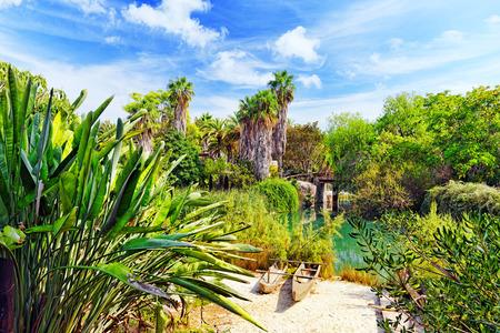 humid: Beautiful landscape of humid tropical jungle Stock Photo