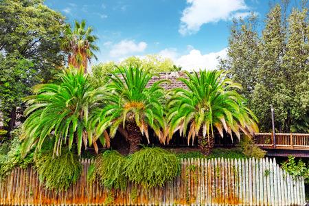 humid: Beautiful landscape of humid tropical jungle.Tropic