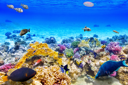 Wonderful and beautiful underwater world with corals and tropical fish. Stockfoto